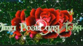 Розы для тебя. Красивые пожелания женщине. Скачать видео открытку.