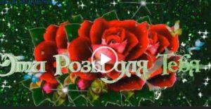 Розы для тебя. Красивые пожелания женщине. Скачать видео открытки.