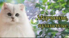 С днем кошек. Красивое видео поздравление. Скачать бесплатно.