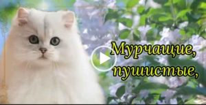 С днем кошек поздравление скачать бесплатно